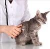 Ветеринарные клиники в Балаково